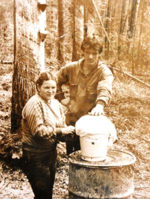 Сборщики живицы позади окаренная сосна со смолоприемниками металлическими